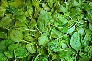 Spinat Blätter