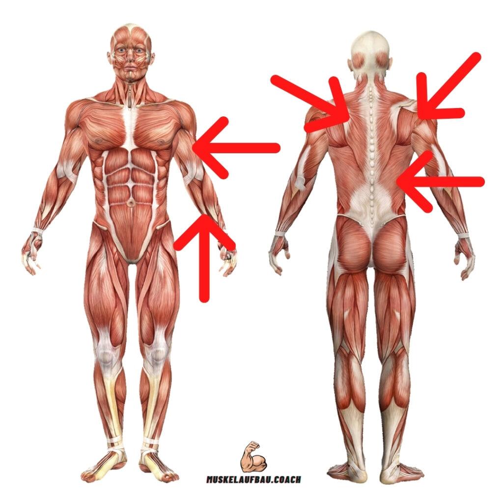 Klimmzüge Muskeln