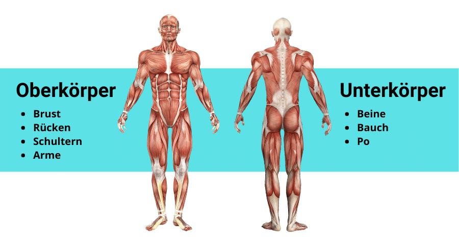 2er Split Muskelgruppen
