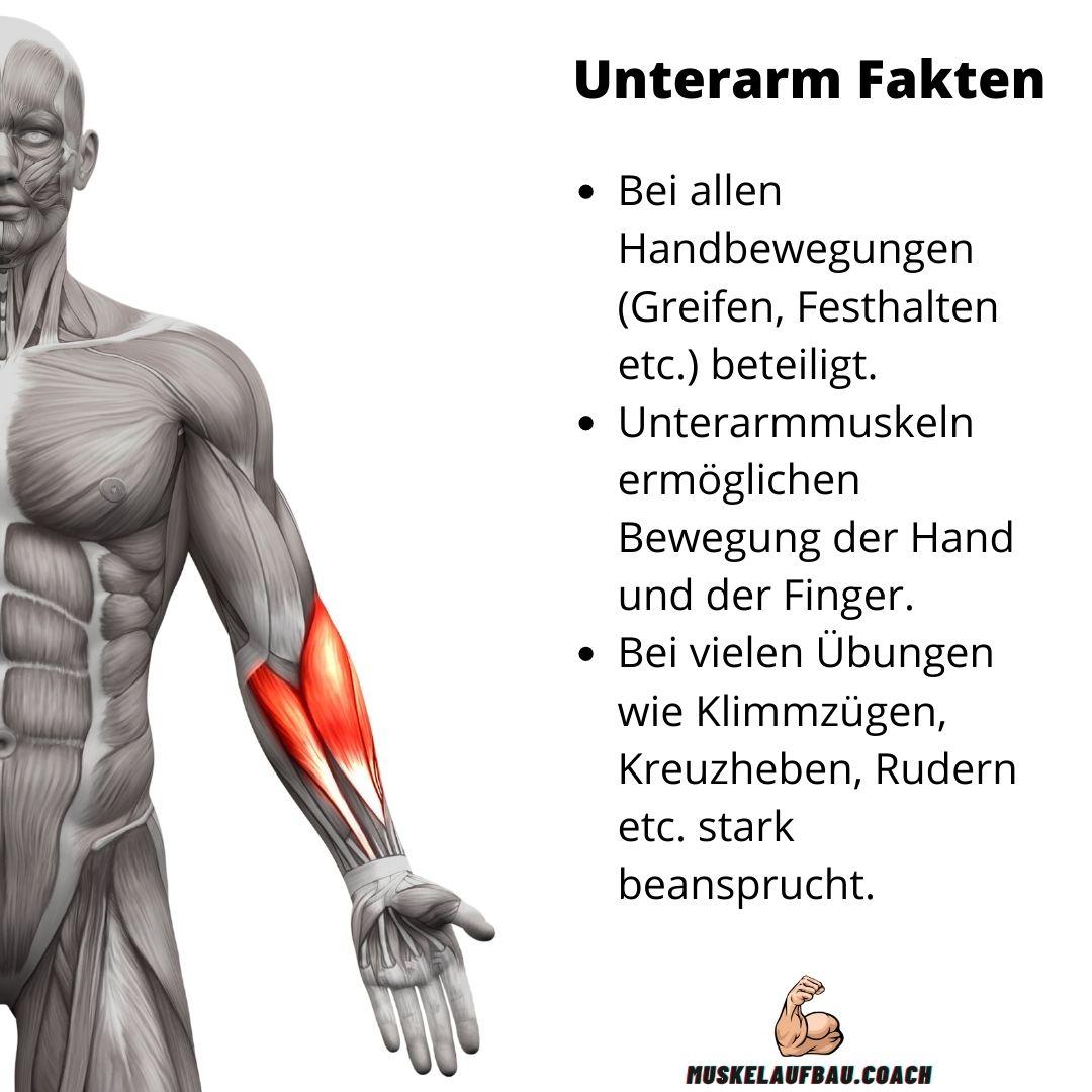 Unterm Anatomie und Funktion